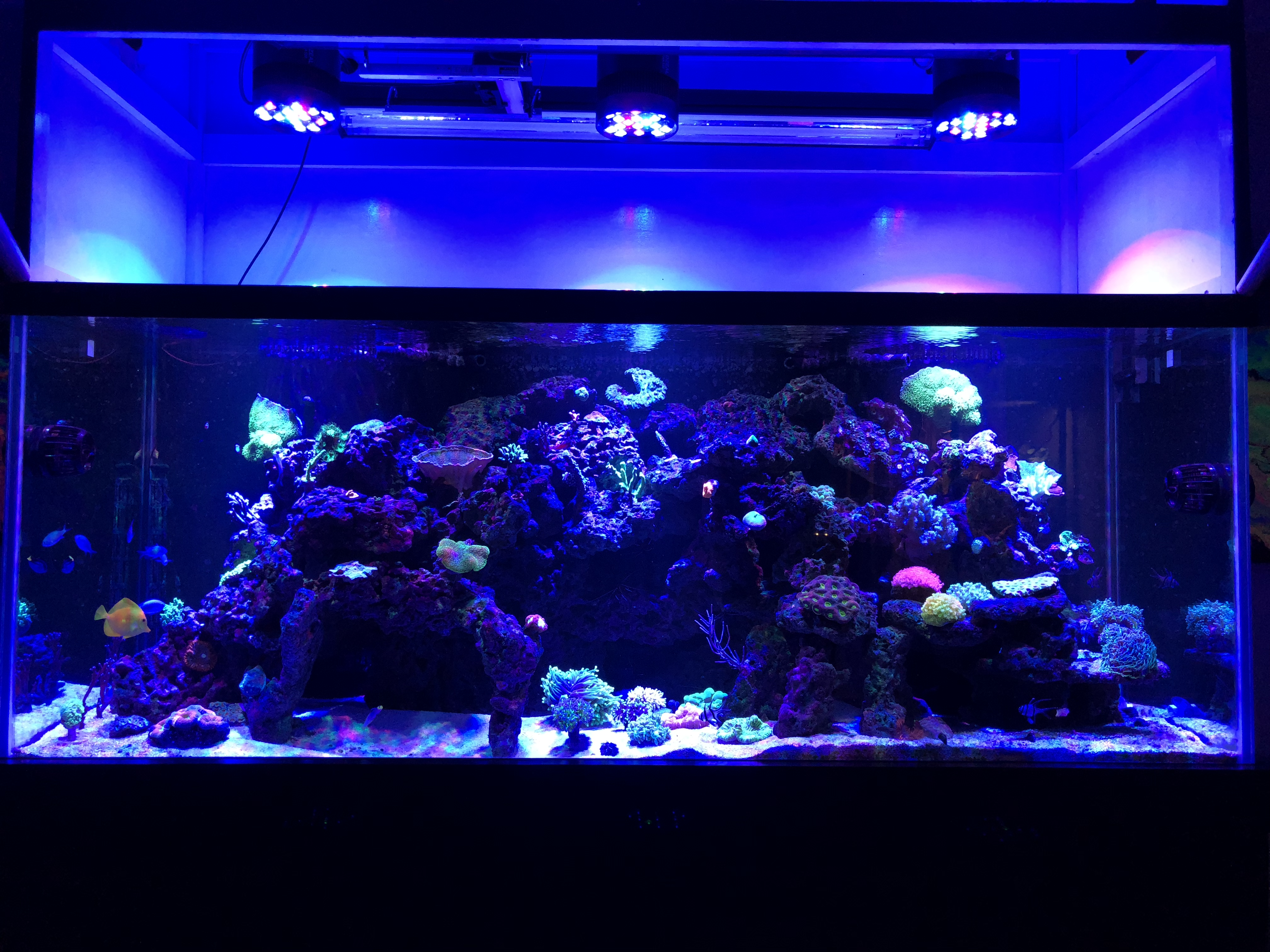 LED Coral Reef Light