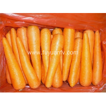Carrot with good taste from shandong 2019