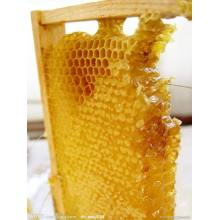 High Quality for Chaste Honey Premium quality fresh pure natural comb honey export to Morocco Importers