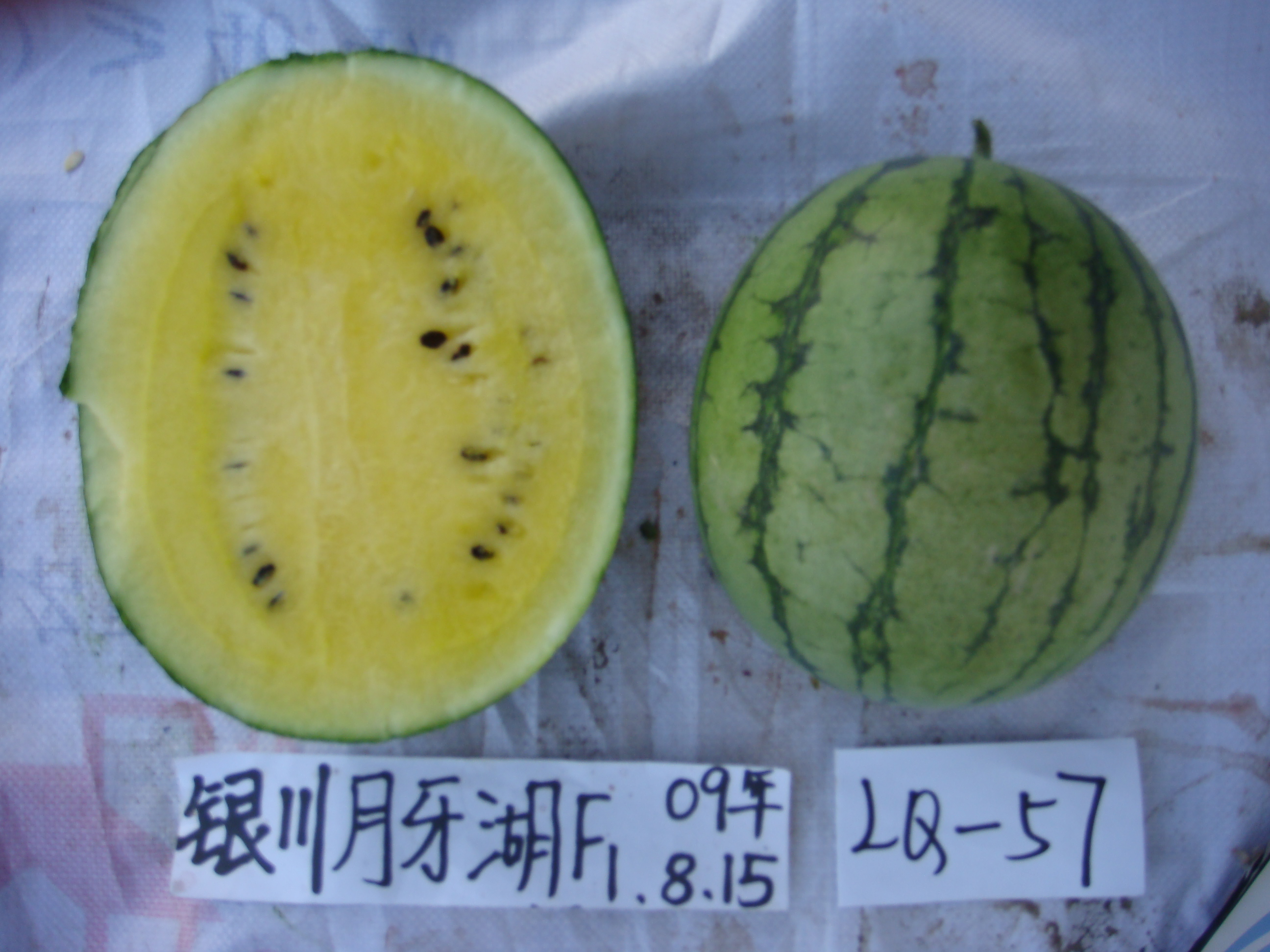 Yellow Flesh Watermelon Seeds for Planting
