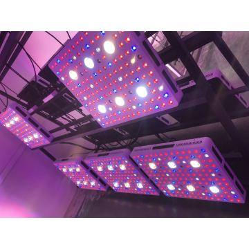 3000 Watt CREE COB LED Grow Light