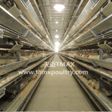 Chicken Cages for Layer Cages