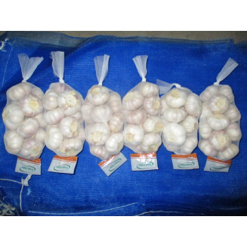 Jinxiang Normal White Garlic Crop 2019