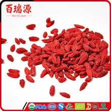 Dried fruits goji berry plants