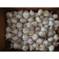 Fresh New Crop Normal White Garlic5.5-6.0