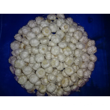 Best Quality Pure Garlic