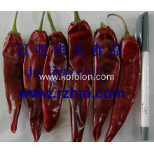 jinta whole chilli