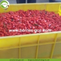 Factory Supply Wholesale Nutrition Dried Goji Organic