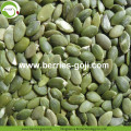 Factory Supply Raw Dried Pumpkin Seed Kernels