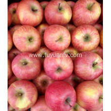 High Quality Fresh New Crop Qinguan apple