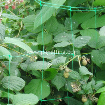 Climbing plant support netting for vegetable