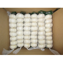 Pure White Garlic In Small Mesh Bag