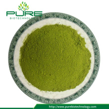 Moringa leaves powder/ Moringa oleifera leaves powder