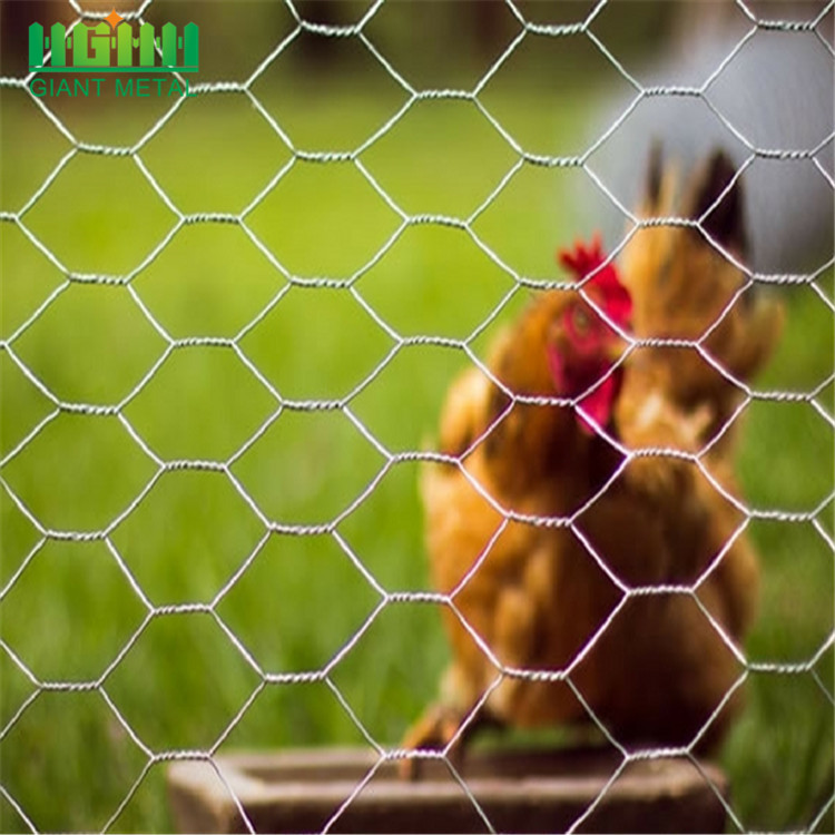 Galvanized Chicken Coop Hexagonal Wire Mesh in Nepal