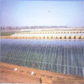UV Treated Greenhouse Cover Film