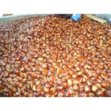 Best Quality New Crop 2019 Chestnut