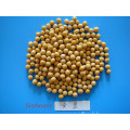 High Protein Dry Soybean