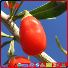 Goji berry dates certified organic goji berry