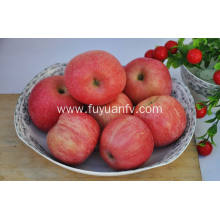 Export New Crop Good Quality Competitive Qinguan apple