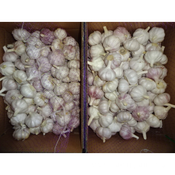 Fresh Best Quality Normal White Garlic