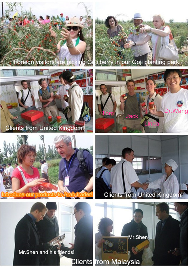 Goji berry Foreign clients visiting