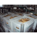 Factory Wholesale Fat Ginger of New Crop