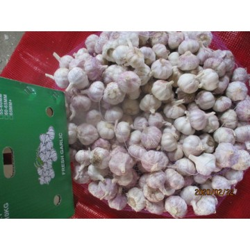 2019 Hot Sale Garlic