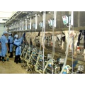 Milking parlor for cows and goats