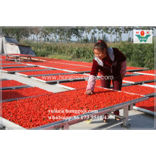 NEW FRESH FRUIT! BULK DRIED GOJI BERRIES