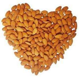 Apricot Kernels Almond Nuts