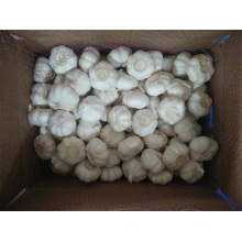 2019 Chinese Pure White Garlic From Jinxiang