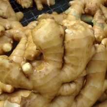2018 New  Season  Fresh Fat Ginger