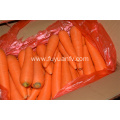 Fresh carrot factory price with good quality