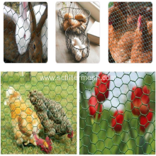 Chicken and Rabbit SS Hexagonal Wire Mesh