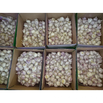 Fresh High Quality Normal White Garlic 2019