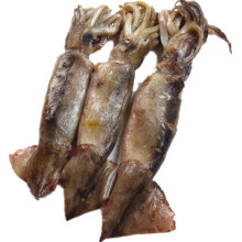 High Quality for Frozen Seafood Mix Whole Round Aircraft Squid supply to Uzbekistan Importers