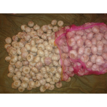 Different Package of Jinxiang Normal White Garlic
