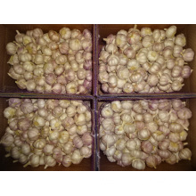 High Quality Normal White Garlic Crop 2019