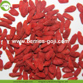 Fruit Product Buy Bulk Package Common Goji Berry