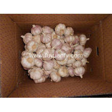 Special for Natural Fresh White Garlic New Crop First level Normal White Garlic export to Luxembourg Exporter