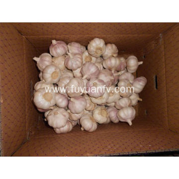 New Crop First level Normal White Garlic