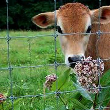 Cattle Fencing Panel/Animal Fence/Deer Fence
