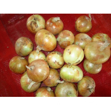 Sizes 3.0-5.0cm Fresh Yellow Onion