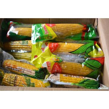 2019 new crop sweet fruit corn