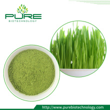 Green Barley Grass Powder /Barley grass juice powder