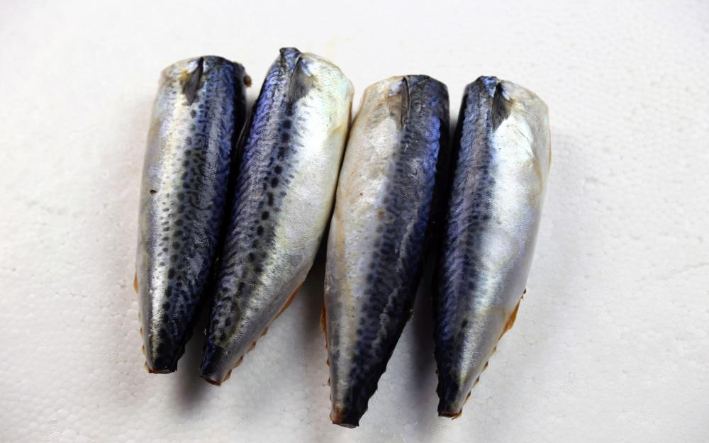 Best Sea Frozen Mackerel HGT