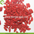 New Arrival Super Food Dried Wolfberry Goji