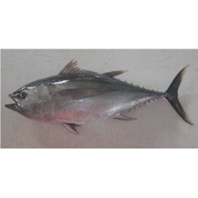 Hot Selling for for Frozen Seafood Mix In Fish Whole Round Big Eye Tuna export to British Indian Ocean Territory Importers