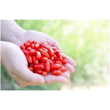Ningxia High Quality improve disease resistance Goji Berry