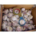 2018harvest best quality Normal white garlic